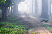 Uttar Pradesh to give facelift to Pilibhit Tiger Reserve
