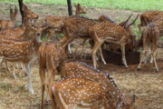 Eco-tourism parks to be developed across all towns, says Telangana Forest Minister