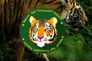 India's tiger census sets new Guinness record for being the world's largest camera trap wildlife survey