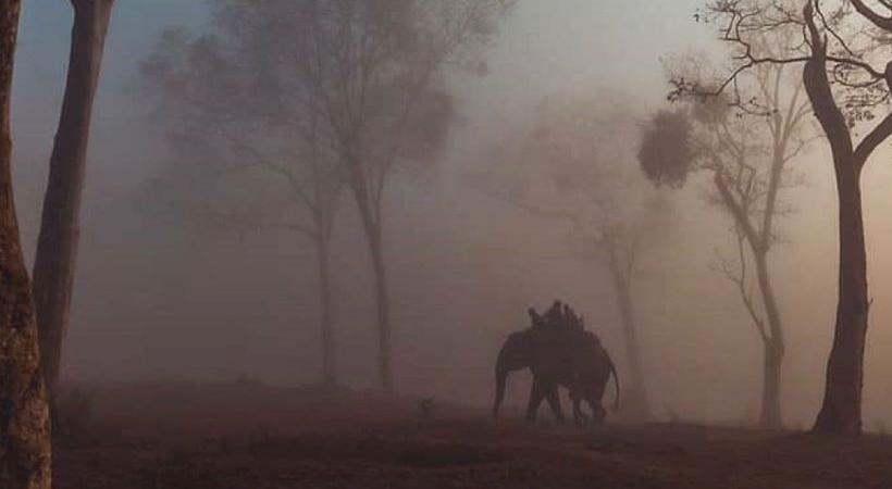 bandipur forest karnataka