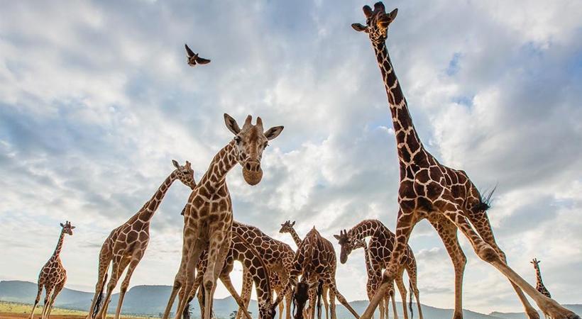 kenya tourism wild