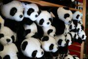 Panda It's Pandas Vs Pandemic at German Restaurants during Lock down