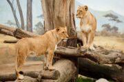 Exploring the Wild Life with Taj Safaris