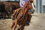 Equestrian tourism to discover Colombia