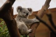 """Australia Receives Lonely Planet's 'Community Restoration"""" Award for 2021"""