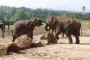 """Go on Safari on the couch "" –Wild Life streaming of Srilanka National Parks a big hit"