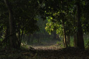 Aralam Wildlife Sanctuary – Paradise for Trekkers and Nature Lovers