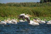 Exploring the Danube Delta