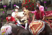 Getting Married on Elephant Top ; The Thai way to tie the knots on elephant on Valentine's Day