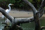 Kadalundi- A bird lover's paradise