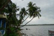 Explore the pristine backwaters of Kavvayi