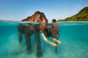 Coral reefs and swimming elephants; Elephant Beach with breathtaking views