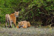 Jim Corbett National Park opens; The beginning of a year-long tourism