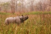 Assam's Orang National Park to reopen from Sept 30